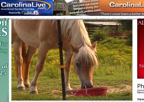 Homem manteve relações sexuais com o cavalo 'Sugar'. (Foto: Reprodução/NewsChannel 15)