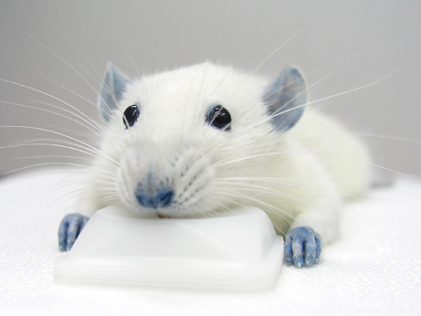 rato-azul-1