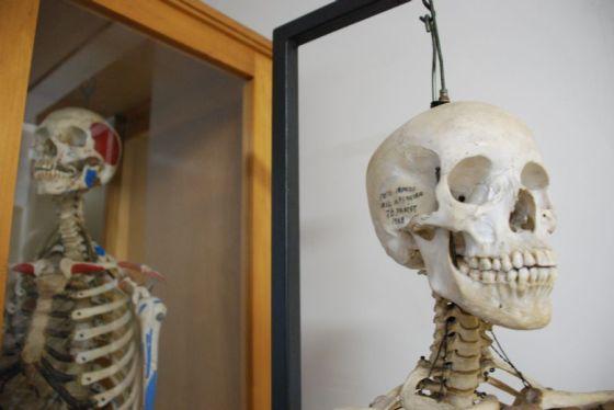 Esqueletos expostos no Museu de Anatomia da Universidade Federal de São Paulo